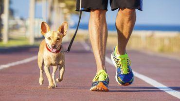 6 activités sportives à pratiquer avec son chien