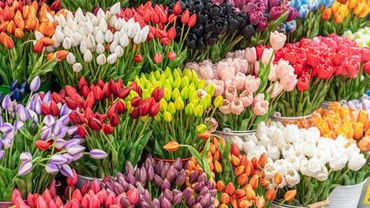 Un marché aux fleurs 2.0 à Tournai