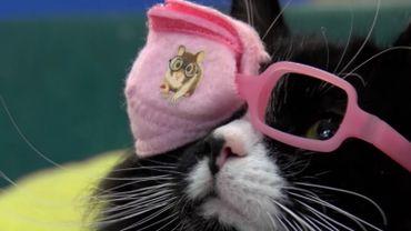 Pour se sentir à l'aise avec des lunettes: optez pour un ophtalmo-chat !