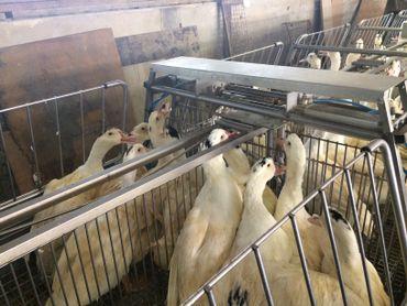 Les fermiers producteurs de foie gras inquiets