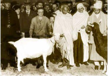 La non-violence de Ghandi concernait aussi les animaux