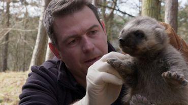 Plongez au cœur de nos forêts dans une série documentaire exceptionnelle !