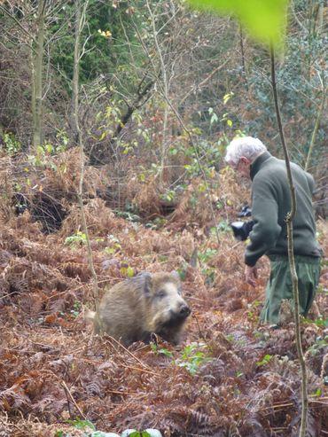 A la rencontre des castors et des sangliers.