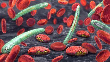 Représentation 3D par ordinateur de Plasmodium et de cellules sanguines
