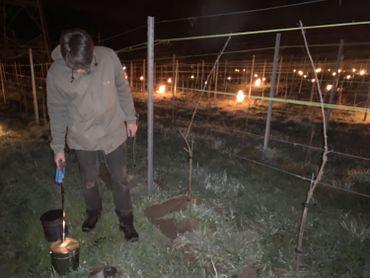 Lobbes : La lutte contre le gel bat son plein dans les vignes