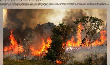 Cette photo a été prise dans l'Etat brésilien de Maranhao le 22 novembre 2014