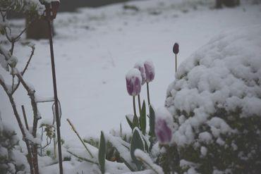 Dans les jardins, les fleurs recouvertes de neige donnent un spectacle original