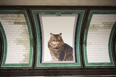 Une station de métro londonienne envahie par des photos de chats