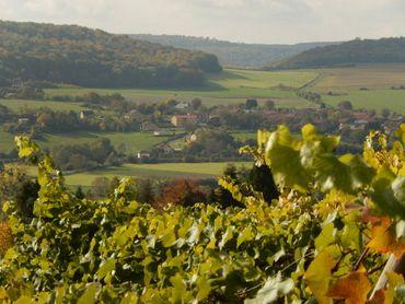 Dans le village le plus méridional de Belgique, les vignes du Poirier du Loup offrent plusieurs cépages comme le pinot noir, le pinot blanc, le chardonnay