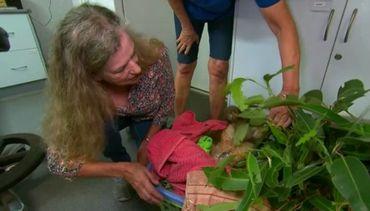 Une Australienne court dans les flammes pour sauver un koala pris au piège