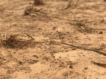Au Nord du Burkina Faso, les terres sont arides à cause du manque de pluie