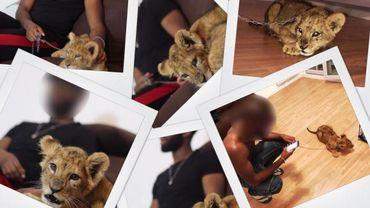 Le 10 octobre, un jeune rappeur a été arrêté pour avoir pris des photos avec un lionceau.