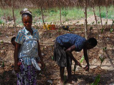Au Ghana, le combat d'une ONG pour reboiser les anciens sites miniers illégaux