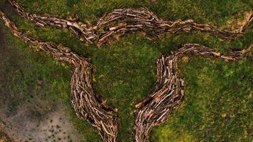 Havelange, terre d'arbres avec Les Ambassadeurs