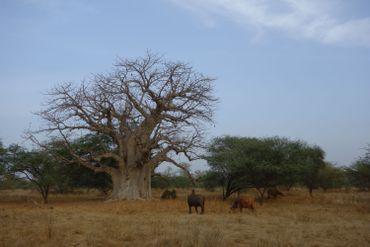 le Sénégal, pays de toutes beautés
