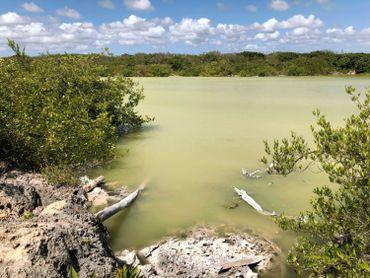 Des mangroves à perte de vue