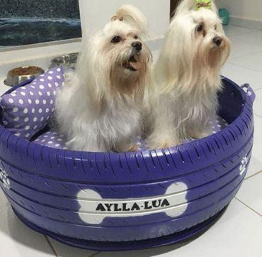 Un jeune Brésilien donne une seconde vie aux pneus usagés : une idée qui a du chien!