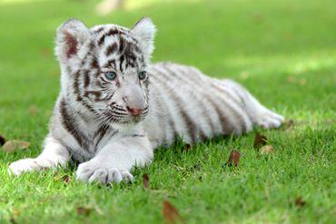 """""""Nounous pour animaux"""" : notre top 5 des bébés les plus mignons"""