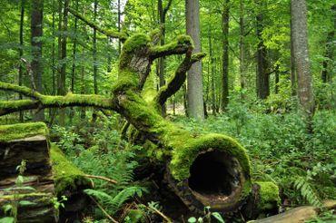 Le bois mort crée un habitat pour des dizaines d'espèces