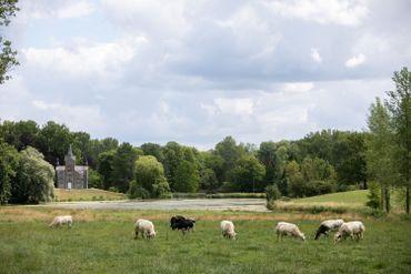Du golf au milieu des vaches ? Tout est possible dans le Condroz avec Michel Lecomte !