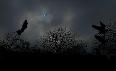 Cliché de l'éclipse pris à Bruxelles