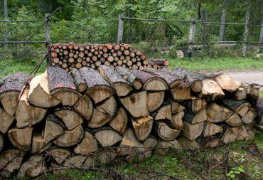 Abattre une forêt à cause d'un insecte?