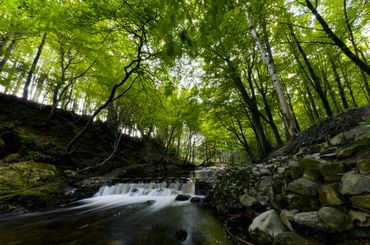 Forêt de Tollymore