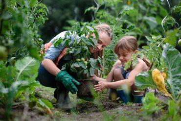 """""""Plantfluencers"""", une influence qui pousse sur les réseaux sociaux."""
