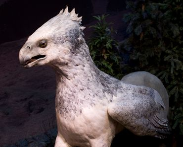 Un hippogriff