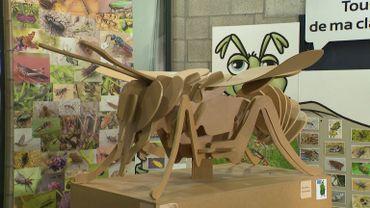 Hexapoda : à la découverte du monde sensationnel des insectes