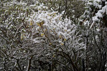 Les branches des arbres soutiennent la poudre blanche