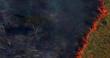 Sur cette on voit une forêt presque entièrement carbonisée a bien été prise en Amazonie mais il ne s'agit pas des feux de forêt actuels