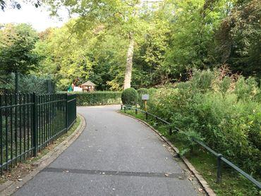 En plein milieu du parc Josaphat à Schaerbeek, l'ambroisie s'est développée le long d'un sentier