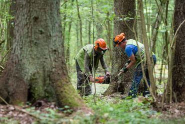 La marché du bois serait-il menacé par le projet Nassonia ?