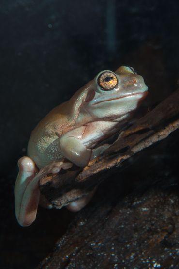 le monde étrange des amphibiens