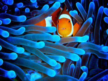 La Grande barrière de corail plus menacée qu'on ne le pensait