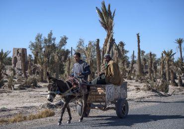 Agriculteurs dans l'oasis de Skoura, ce 27 janvier