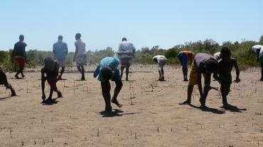 Toutes les générations participent à la plantation de Mangrove