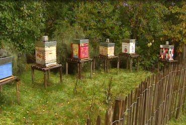 Les ruches décorées par les enfants des écoles