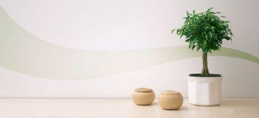 Les plantes d'intérieur, de vrais filtres à pollution!