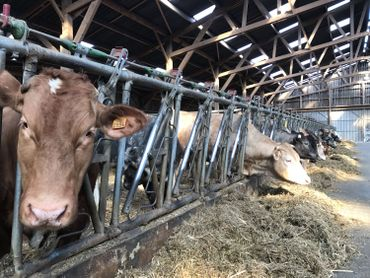 Une boucherie à la ferme pour lutter contre les dérives industrielles de la filière de la viande