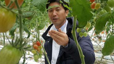 Hiroshi Motoki fait preuve du même volontarisme : il vend 1400 tonnes de tomates par an.