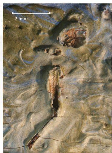Un cadavre est dans cette peinture de Van Gogh depuis 128 ans