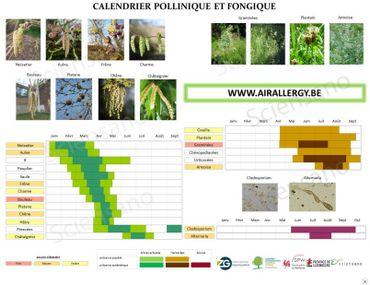 Calendrier pollinique et fongique disponible sur le site airallergy.be