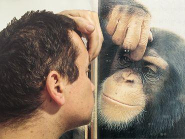Le contentieux stratégique, le grand singe et le pouvoir d'agir