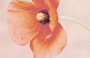 Sa fleur fétiche