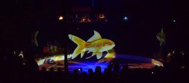 En général, les poissons n'ont pas leur place dans les cirque mais grâce à la technologie, c'est possible