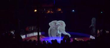 L'éléphant, animal phare du cirque, est de retour sous le chapiteau de Roncalli qu'il a quitté depuis 1990