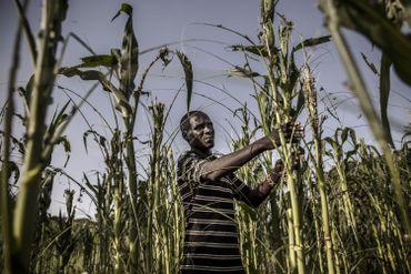 Un fermier dans ses champs à Napeikar, comté de Turkana, Kenya le 2 juin