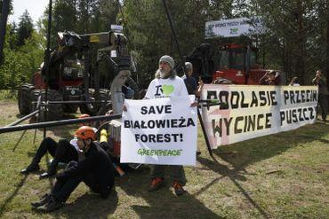 Action de Greenpeace pour sauver les arbres dans la forêt de Bialowieza, en Pologne